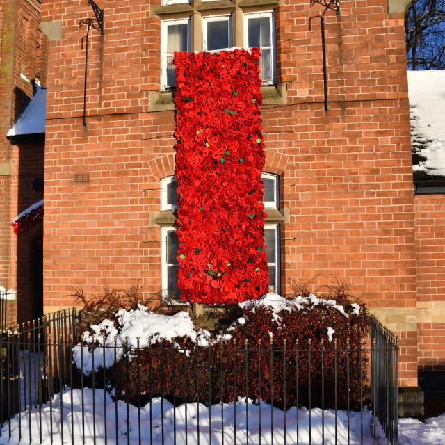 """Remembrance poppy"" stock image"