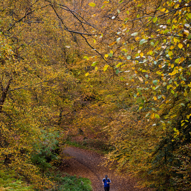"""""""Man Running Along a Forest Path"""" stock image"""
