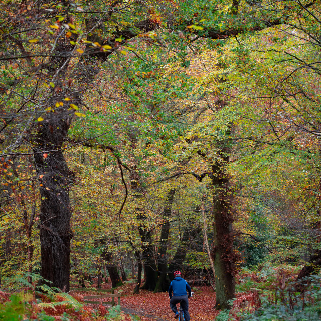 """""""Cyclist in the Forest"""" stock image"""