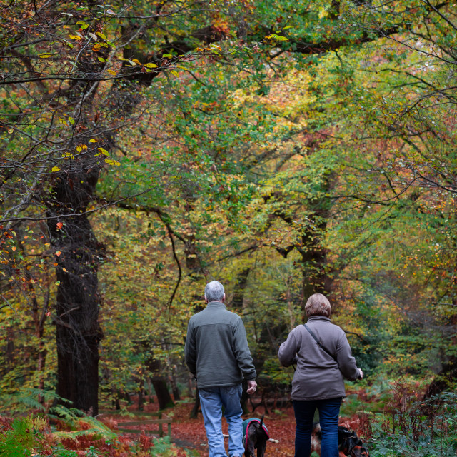 """""""Couple Walking Dogs in Forest"""" stock image"""