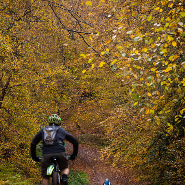 """""""Two Cyclists in the Forest"""" stock image"""