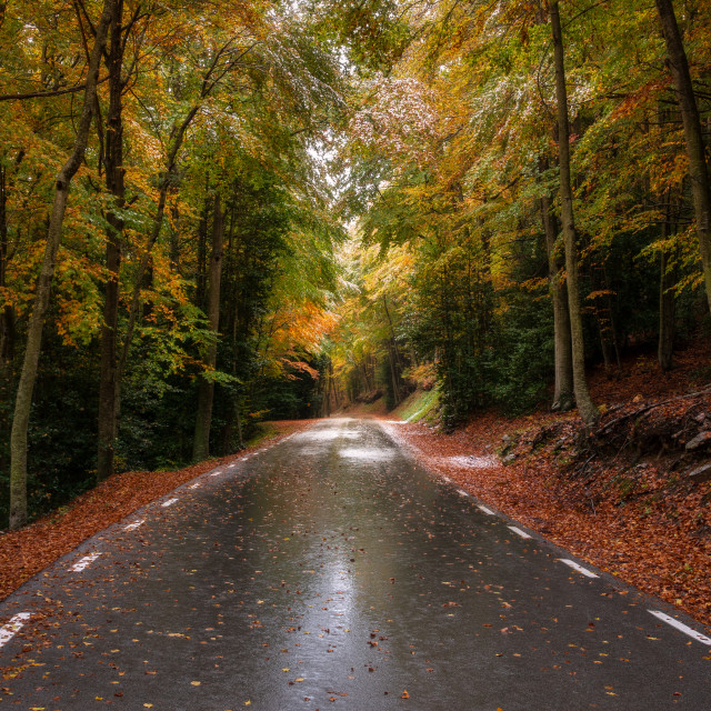 """Way to autumn"" stock image"