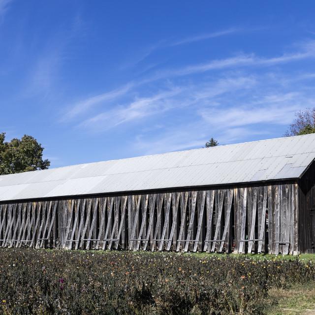 """A tobacco barn, South Deerfield, Massachusetts"" stock image"