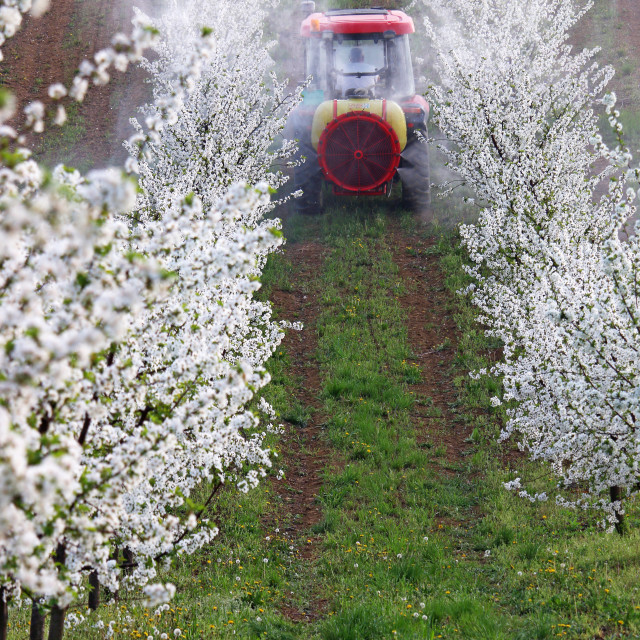 """""""tractor sprays insecticide in orchard agriculture"""" stock image"""