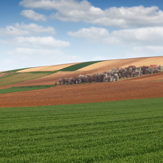"""""""green wheat and plowed fields farmland agriculture"""" stock image"""