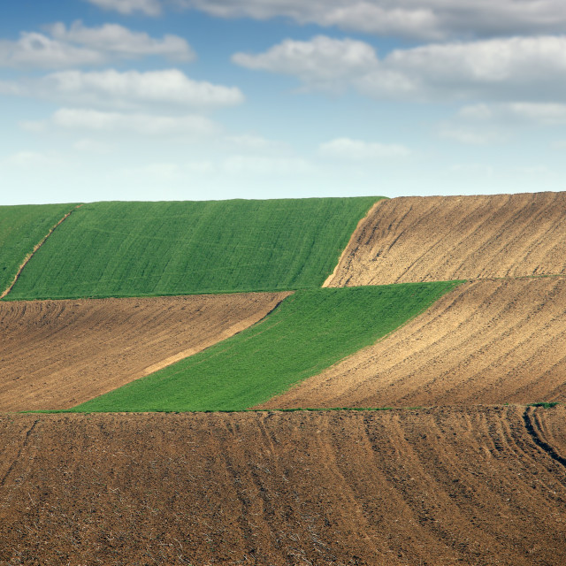 """""""green wheat and plowed fields landscapes"""" stock image"""