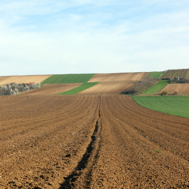 """""""green wheat and plowed fields landscapes agriculture"""" stock image"""