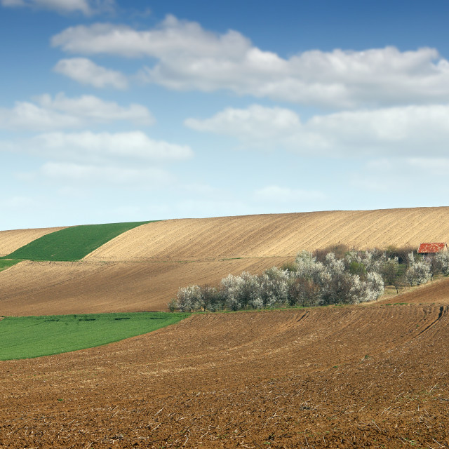 """""""orchard on hill and plowed fields farmland landscape agriculture"""" stock image"""