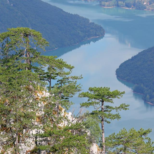 """Pine trees on mountain nature landscape summer season"" stock image"