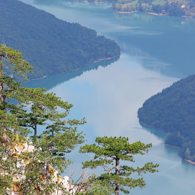"""Pine trees on mountain nature landscape"" stock image"