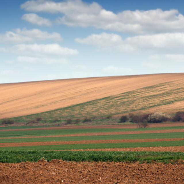 """""""young green wheat field landscape"""" stock image"""