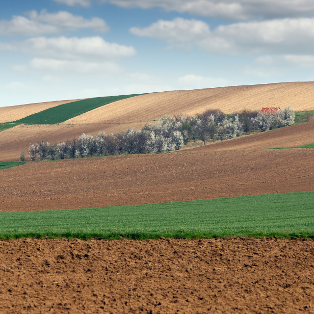 """""""young green wheat and plowed fields and orchard landscape"""" stock image"""