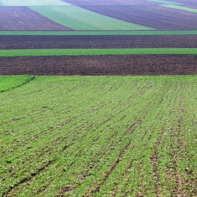 """""""young green wheat and plowed fields nature background"""" stock image"""