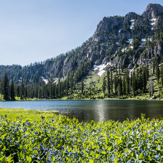 """""""Tranquil alpine lake with wildflowers blooming in the foreground and a rugged..."""" stock image"""