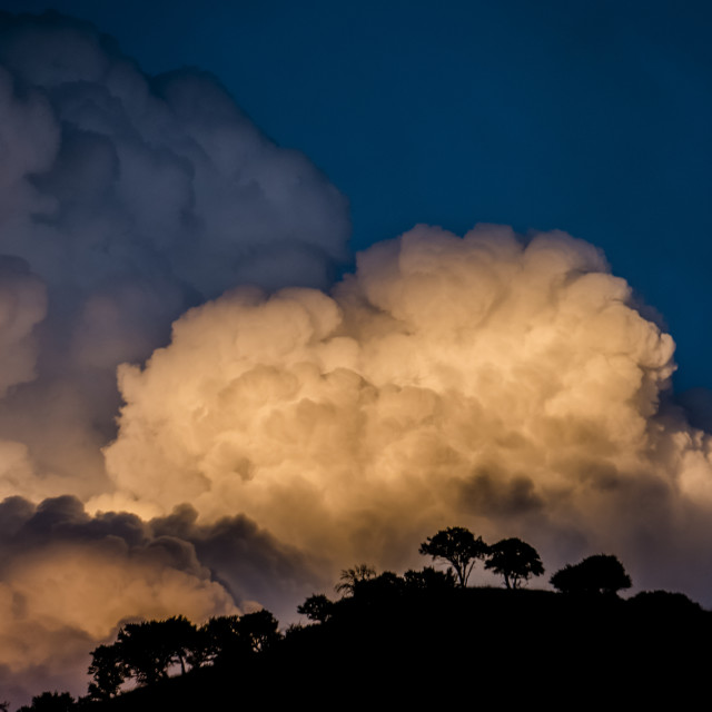 """""""Billowing clouds glowing at sunset over silhouetted trees and hilltop; Utah,..."""" stock image"""