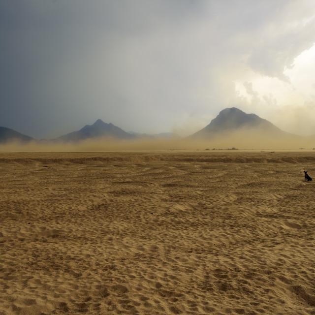 """Sandstorm raging over the bank of Mahanadi river during dusk, su"" stock image"