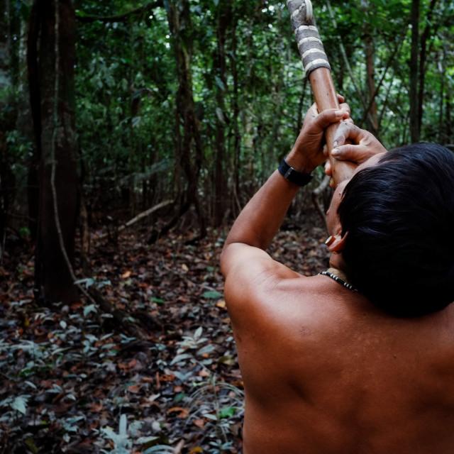 """Atalaia du Norde, Amazonia / Brazil - FEB 02 2016:Tribal elder Binan Tukum hunting with his son for monkeys in the rainforest"" stock image"