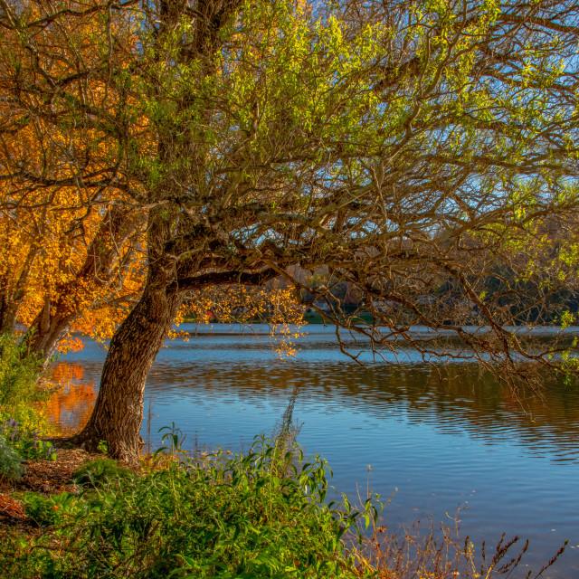 """Autumn View of Lake Junaluska"" stock image"