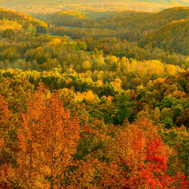 """Autumn Hardwood Brilliance"" stock image"