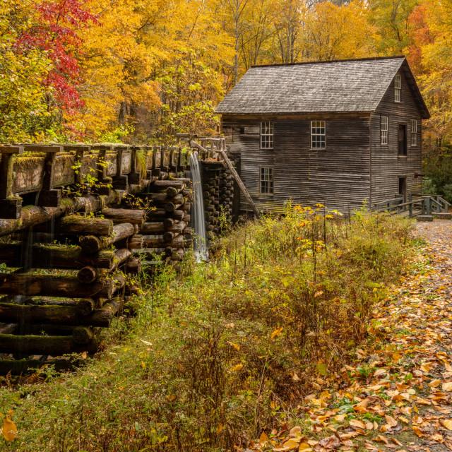 """""""Mingus Mill Autumn Portrait View"""" stock image"""