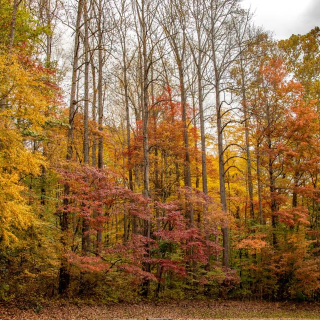 """""""Smoky Mountain Autumn"""" stock image"""