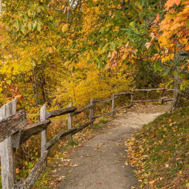 """""""Autumn on the Cataloochee Valley Overlook"""" stock image"""