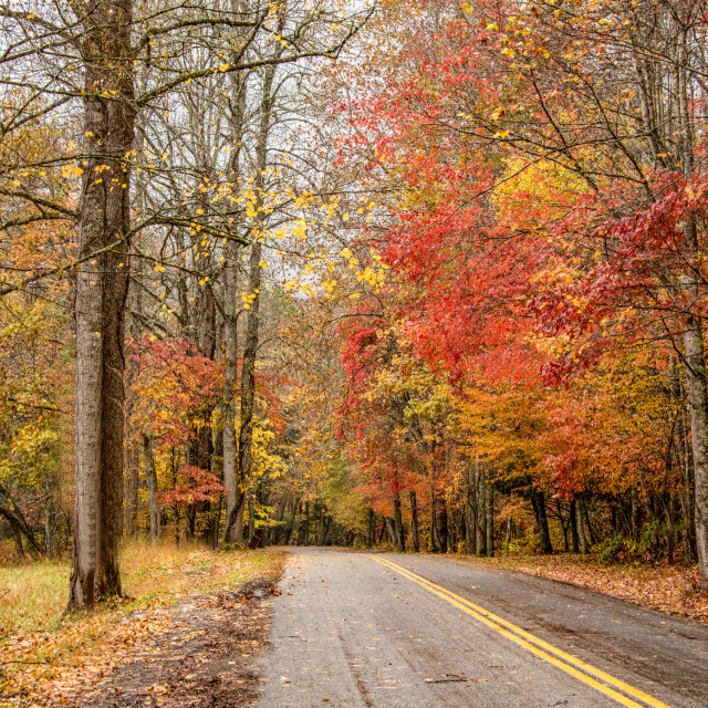 """Cataloochee Valley Rainy Autumn Day"" stock image"