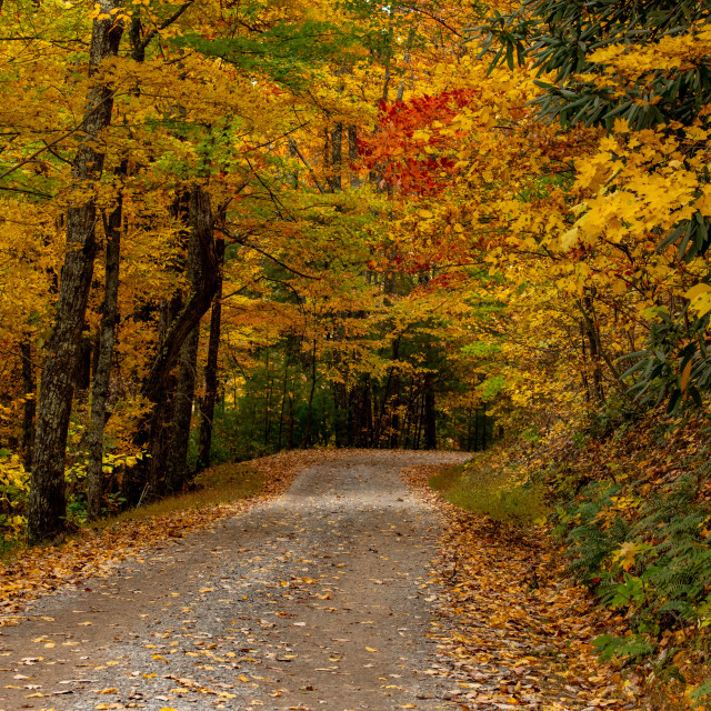 """Rich Mountain Road in Autumn"" stock image"