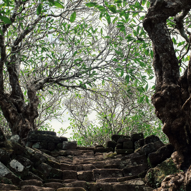 """""""stairs leading to the sky with trees as a part of an ancient monument the unesco protected heritage Wat Phu"""" stock image"""