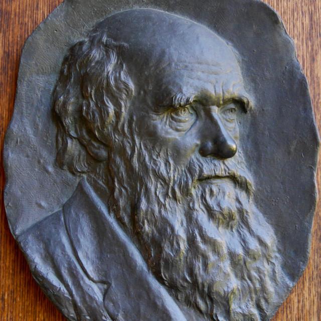 """Charles Darwin"" stock image"