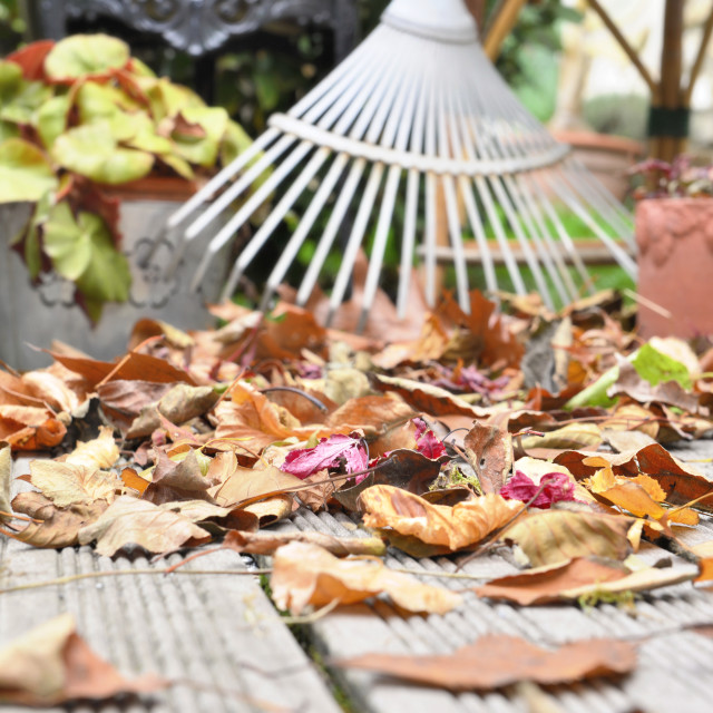 """dry leave and rake on terrace"" stock image"