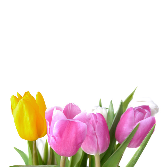 """bouquet of colorful tulips on white"" stock image"
