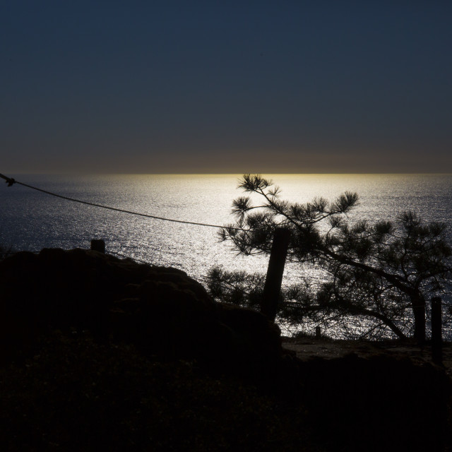 """""""Pine Silhouette"""" stock image"""