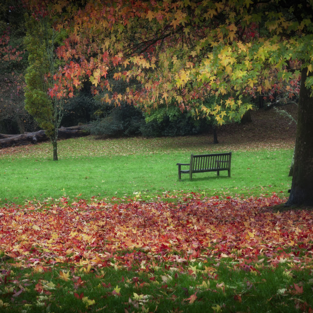 """An Autumn bench at Clyne Gardens"" stock image"