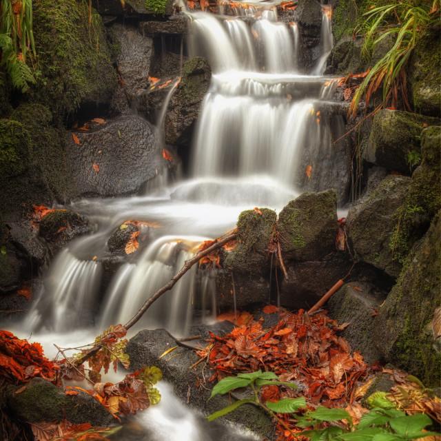 """Clyne Gardens waterfall cascade"" stock image"