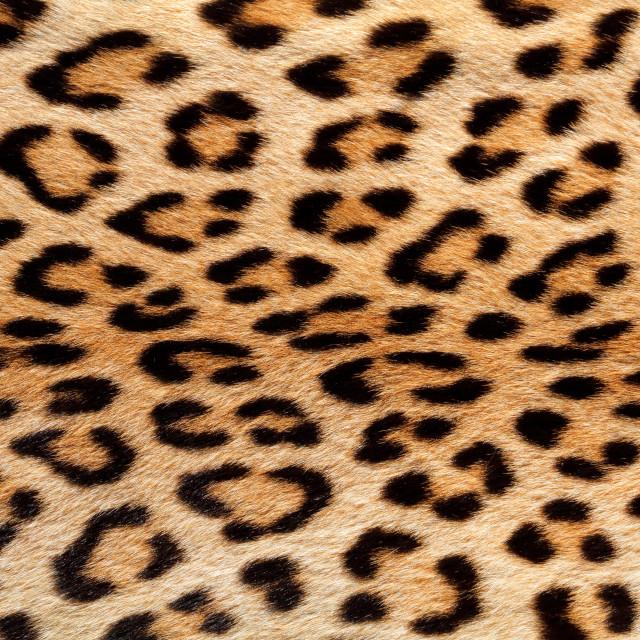 """Leopard skin background"" stock image"