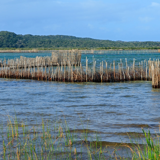 """Traditional fish traps - Kosi Bay"" stock image"