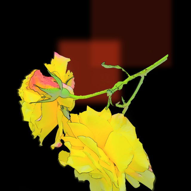 """""""Cubist Roses"""" stock image"""
