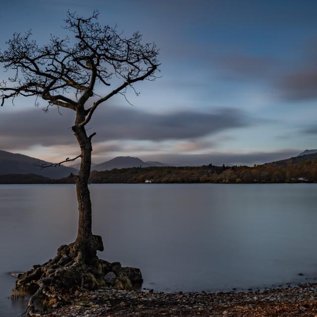 """Lone tree"" stock image"