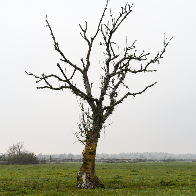"""Lone bare tree in a grassland"" stock image"