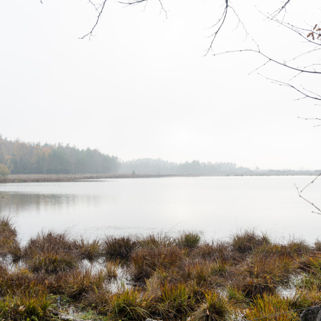 """Misty pond at fall season"" stock image"