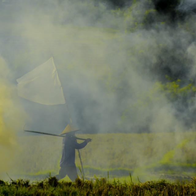 """Burning Rice Field"" stock image"