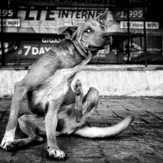 """Street Dog"" stock image"