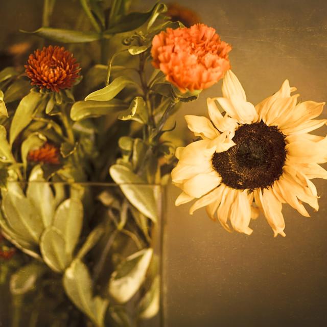 """""""Bouquet of Sunflowers and Orange Mums in Front of a Golden Tan Textured Wall"""" stock image"""
