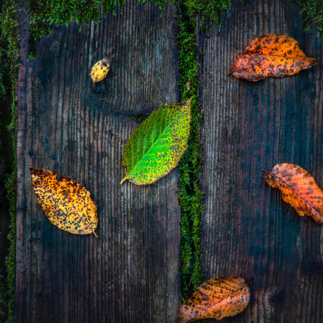 """""""Bright colorful autumn leaves on rustic wooden background"""" stock image"""