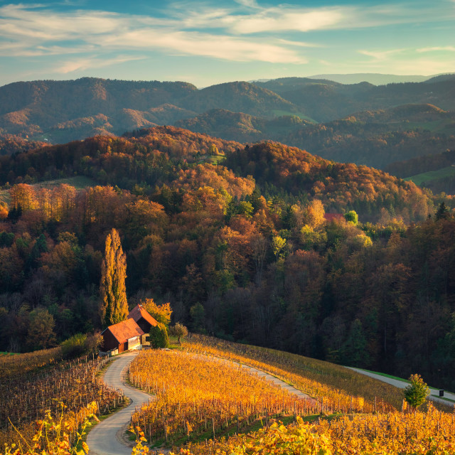 """Famous Heart shaped wine road in Slovenia, view from Spicnik ne"" stock image"