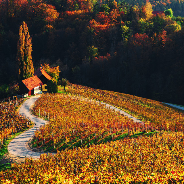 """""""Famous Heart shaped wine road in Slovenia, view from Spicnik ne"""" stock image"""