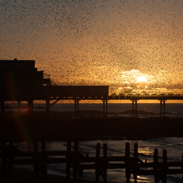 """""""A murmuration of Starlings on the West Coast of Wales in a small seaside town of Aberystwyth, Ceredigion. This is a general sight every year as this is one of only six place in thwhole of the UK that plays host to these wonderful birds."""" stock image"""