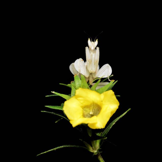"""""""Flower Queen"""" stock image"""