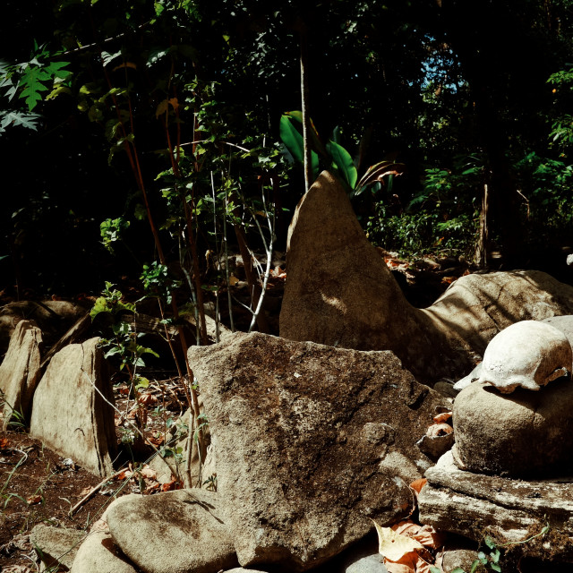 """""""human remains bones and scull at a traditional cannibal site next to a ground oven"""" stock image"""